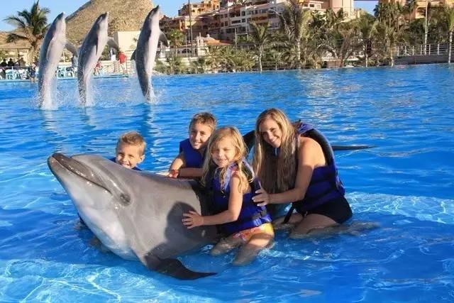 Visita a los delfines