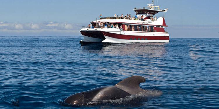 出海看鲸鱼