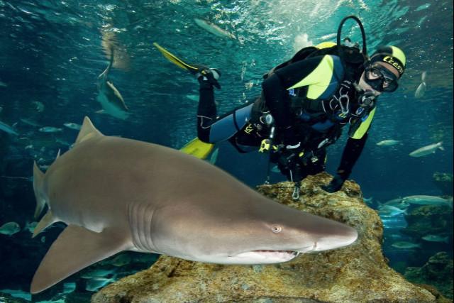 鲨鱼潜水体验